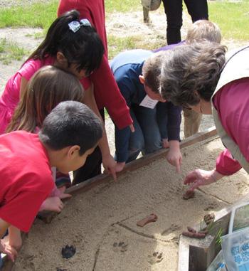 Students identifying animal tracks