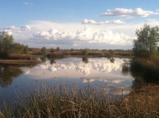 Tour Davis Wetlands